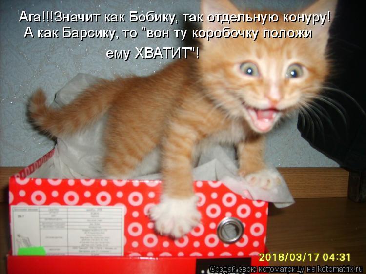 "Котоматрица: Ага!!!Значит как Бобику, так отдельную конуру! А как Барсику, то ""вон ту коробочку положи ему ХВАТИТ""!"