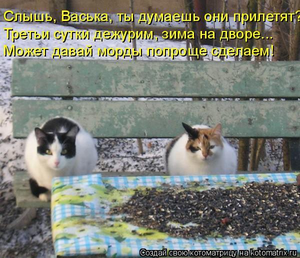 Котоматрица: Слышь, Васька, ты думаешь они прилетят? Третьи сутки дежурим, зима на дворе... Может давай морды попроще сделаем!