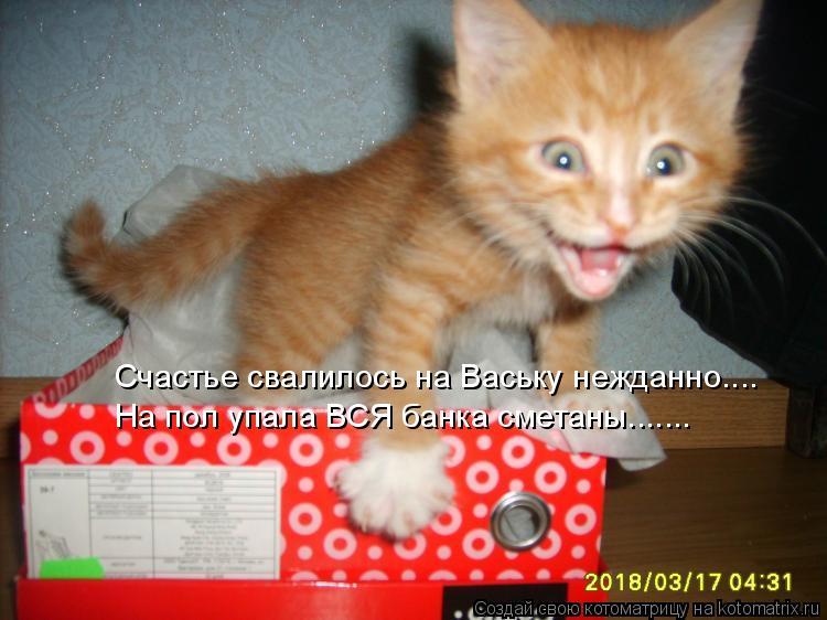 Котоматрица: Счастье свалилось на Ваську нежданно.... На пол упала ВСЯ банка сметаны.......