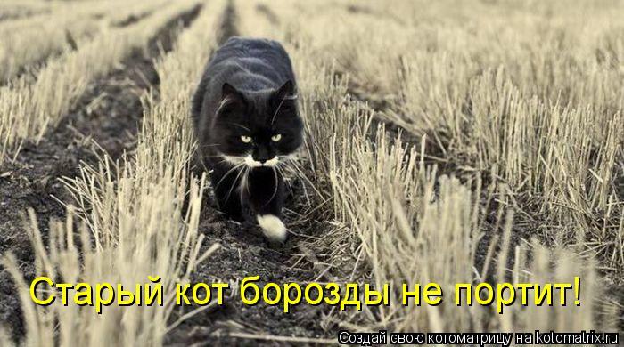 Котоматрица: Старый кот борозды не портит!