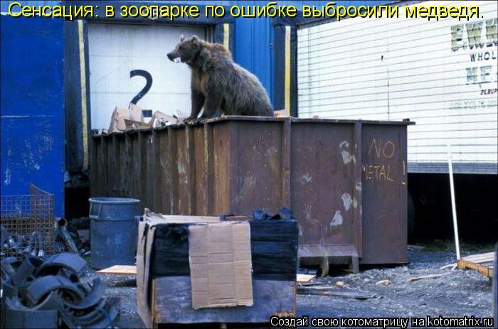Котоматрица: Сенсация: в зоопарке по ошибке выбросили медведя.