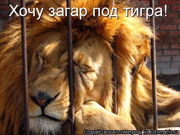 Котоматрица: Хочу загар под тигра!