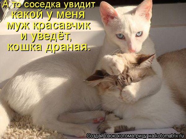 Котоматрица: А то соседка увидит  какой у меня  муж красавчик  и уведёт,  кошка драная.