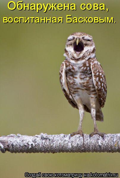 Котоматрица: Обнаружена сова,  воспитанная Басковым.