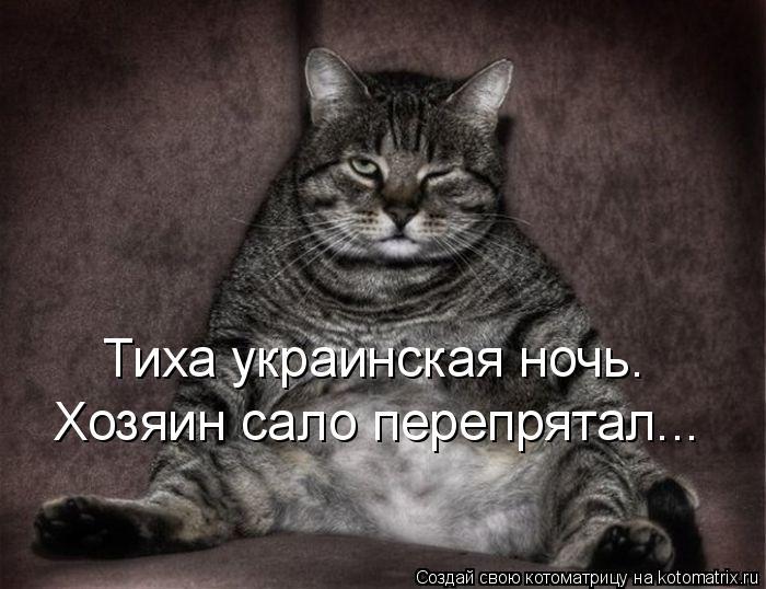 Котоматрица: Тиха украинская ночь. Хозяин сало перепрятал...