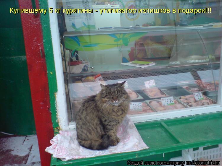 Котоматрица: Купившему 5 кг курятины - утилизатор излишков в подарок!!!