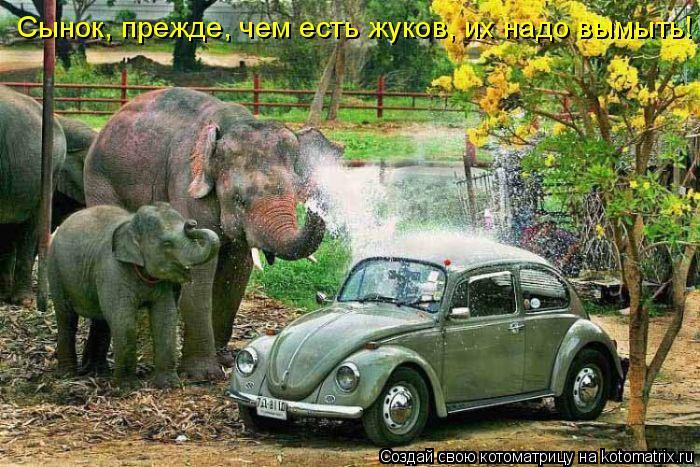 Котоматрица: Сынок, прежде, чем есть жуков, их надо вымыть!
