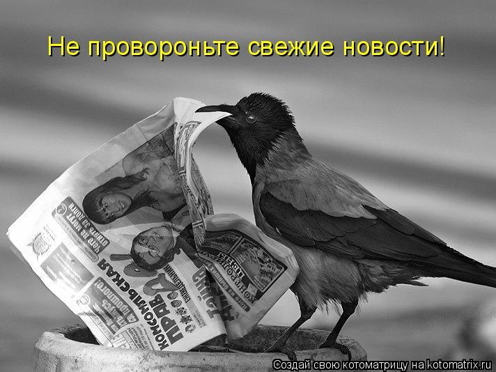 Котоматрица: Не провороньте свежие новости!