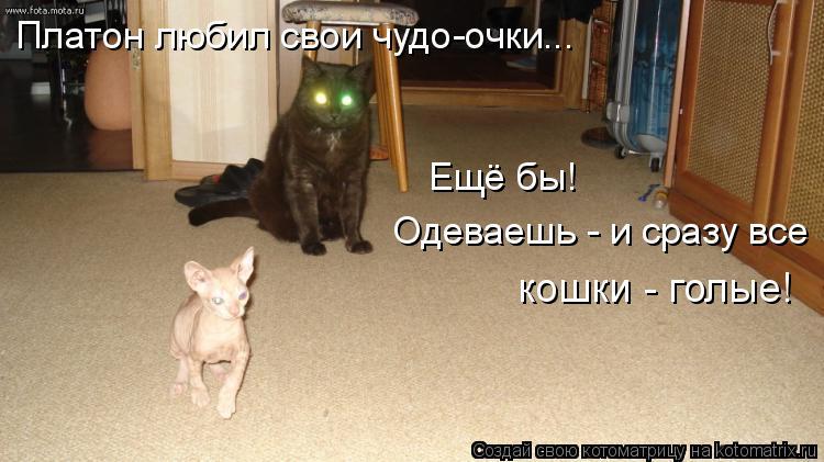 Котоматрица: Платон любил свои чудо-очки... Ещё бы!  Одеваешь - и сразу все кошки - голые!