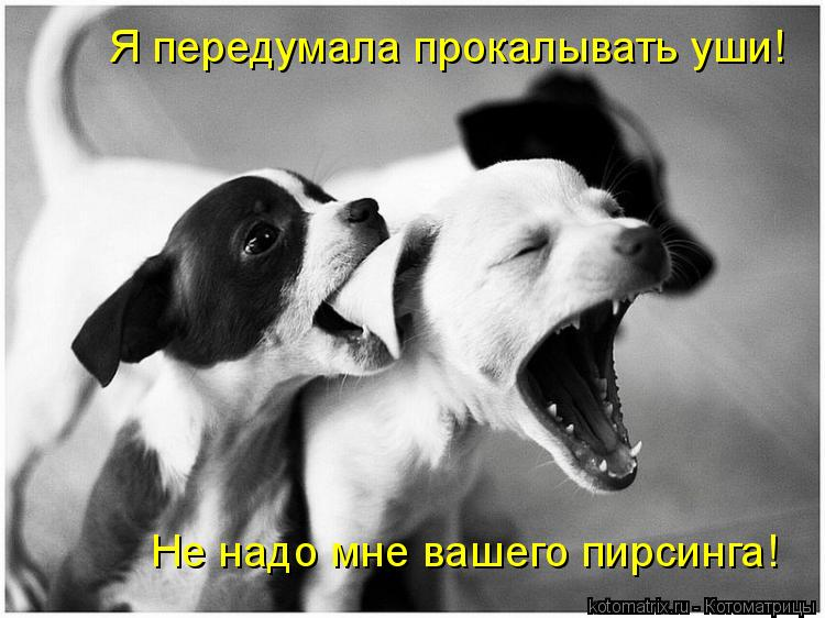 Котоматрица: Я передумала прокалывать уши! Не надо мне вашего пирсинга!