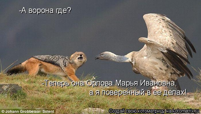 Котоматрица: -А ворона где? -Теперь она Орлова Марья Ивановна, а я поверенный в ее делах!