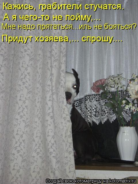 Котоматрица: Кажись, грабители стучатся. А я чего-то не пойму,….. Придут хозяева,….. спрошу…... Мне надо прятаться…..иль не бояться?