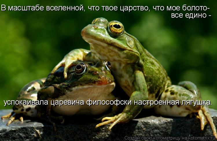 Котоматрица: В масштабе вселенной, что твое царство, что мое болото- все едино -  успокаивала царевича философски настроенная лягушка.