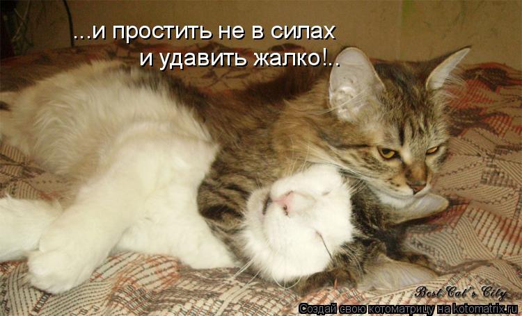Котоматрица: ...и простить не в силах и удавить жалко!..