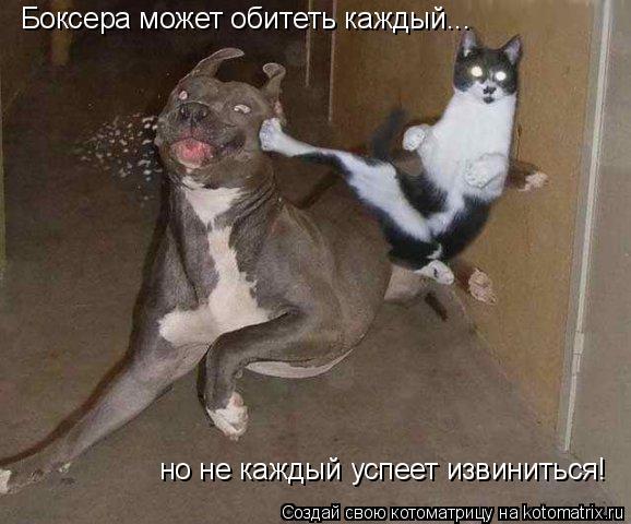 Котоматрица: Боксера может обитеть каждый... но не каждый успеет извиниться!