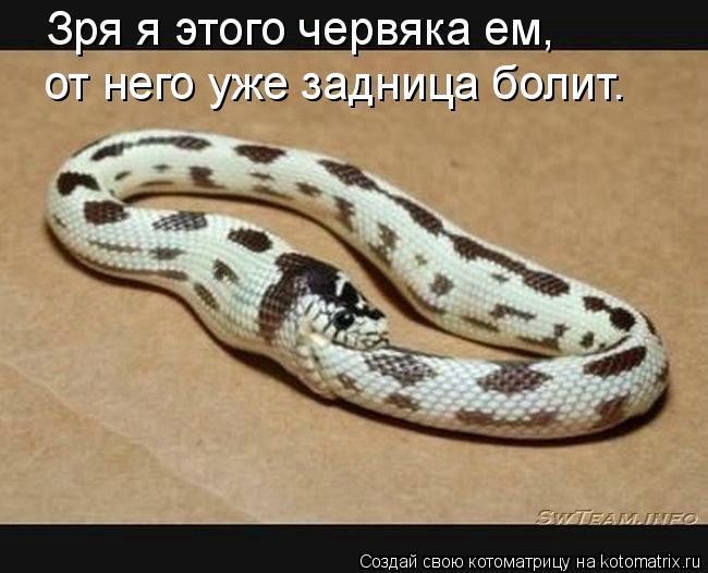 Котоматрица: Зря я этого червяка ем, от него уже задница болит.