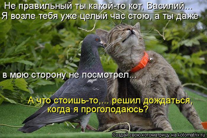 Котоматрица: Не правильный ты какой-то кот, Василий...  Я возле тебя уже целый час стою, а ты даже  когда я проголодаюсь?  А что стоишь-то,... решил дождаться,