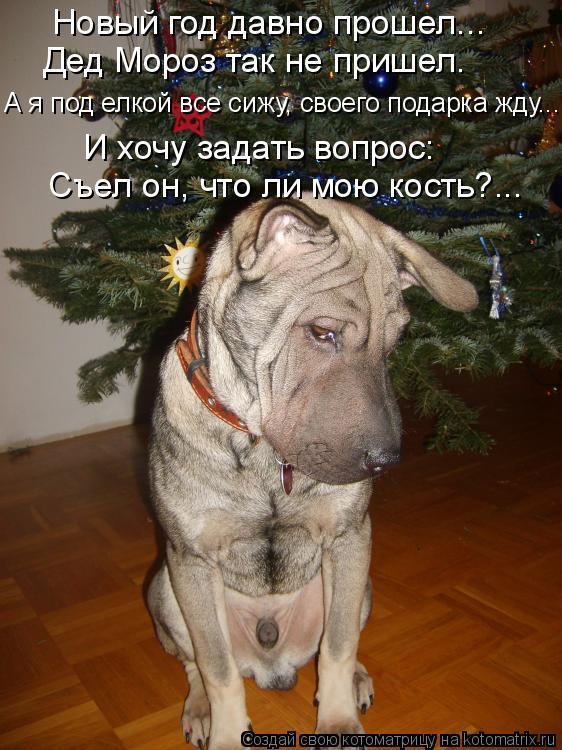 Котоматрица: Новый год давно прошел...   Дед Мороз так не пришел. А я под елкой все сижу, своего подарка жду…..  И хочу задать вопрос: Съел он, что ли мою кост