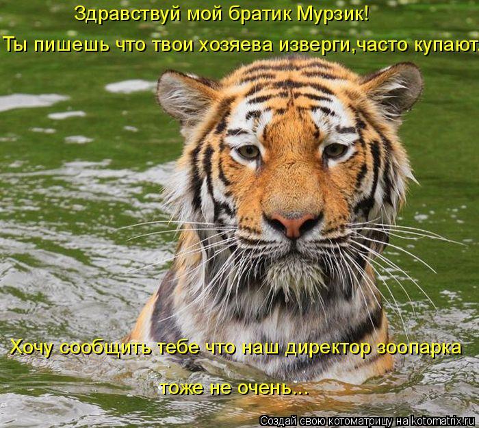 Котоматрица: Здравствуй мой братик Мурзик! Ты пишешь что твои хозяева изверги,часто купают. Хочу сообщить тебе что наш директор зоопарка тоже не очень...