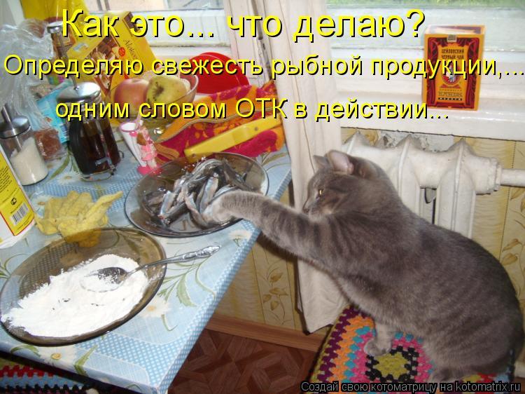 Котоматрица: Как это….. что делаю?  Определяю свежесть рыбной продукции,...  одним словом ОТК в действии...