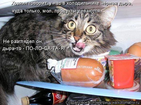 Котоматрица: Хозяин говорит, у нас в холодильнике чёрная дыра,  куда только, мол, продукты деваются... Не разглядел он, дыра-то - ПО-ЛО-СА-ТА-Я!