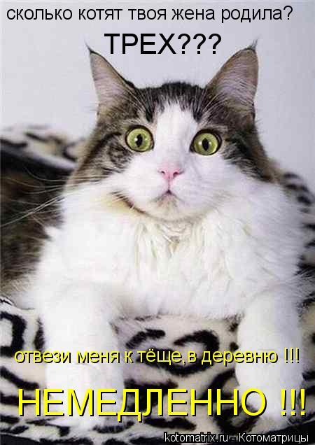 Котоматрица: сколько котят твоя жена родила? ТРЕХ??? отвези меня к тёще,в деревню !!! НЕМЕДЛЕННО !!!