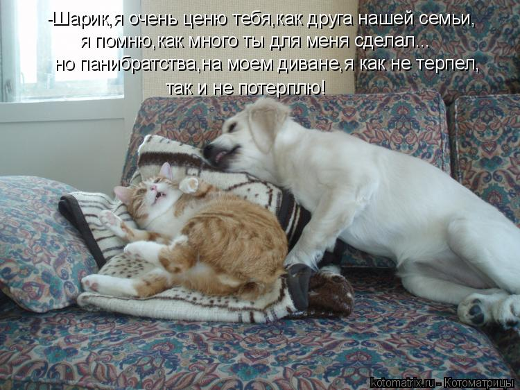 Котоматрица: -Шарик,я очень ценю тебя,как друга нашей семьи, я помню,как много ты для меня сделал... но панибратства,на моем диване,я как не терпел, так и не