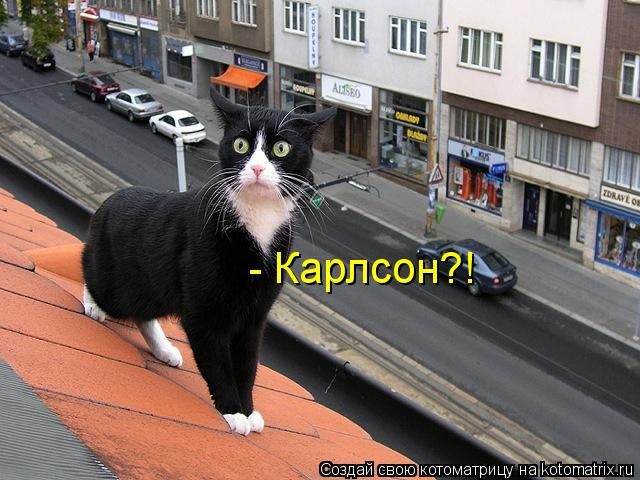 Котоматрица: - Карлсон?!
