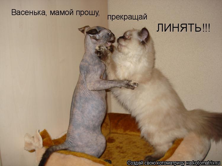 Котоматрица: Васенька, мамой прошу, прекращай ЛИНЯТЬ!!!