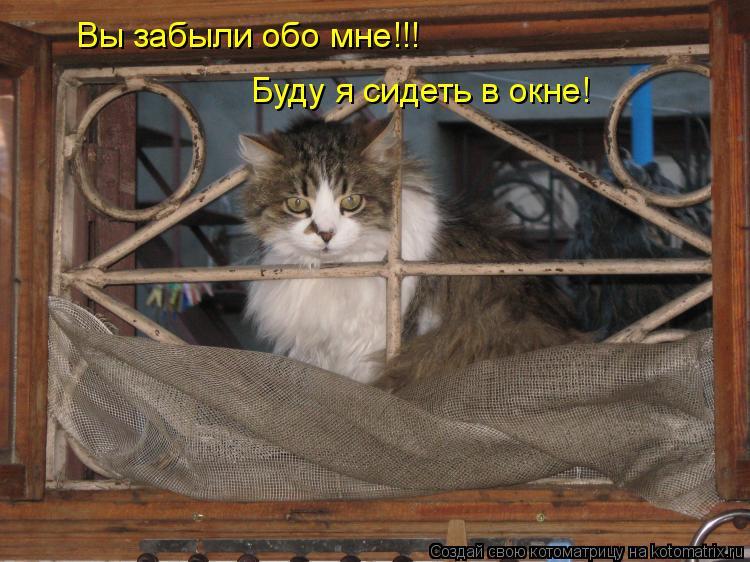 Котоматрица: Вы забыли обо мне!!! Буду я сидеть в окне!
