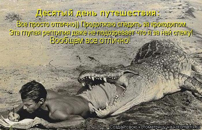 Котоматрица: Эта глупая рептилия даже не подозревает что я за ней слежу!  Все просто отлично)) Продолжаю следить за крокодилом. Вообщем все отлично!  Деся