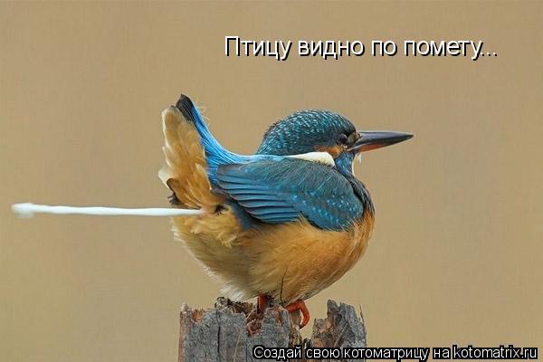 Котоматрица: Птицу видно по помету...