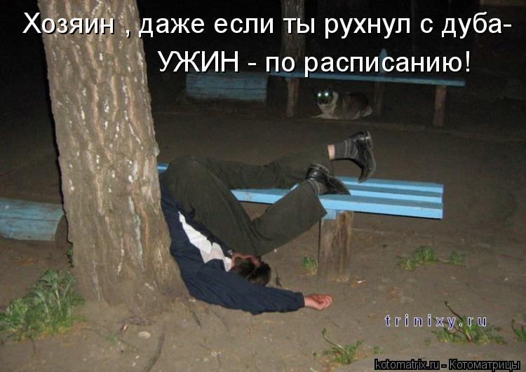 Котоматрица: Хозяин , даже если ты рухнул с дуба- УЖИН - по расписанию!