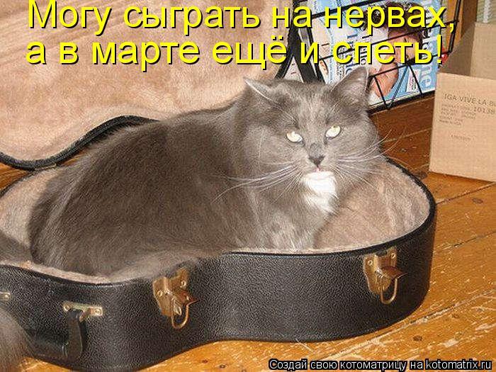 Котоматрица: Могу сыграть на нервах,  а в марте ещё и спеть!