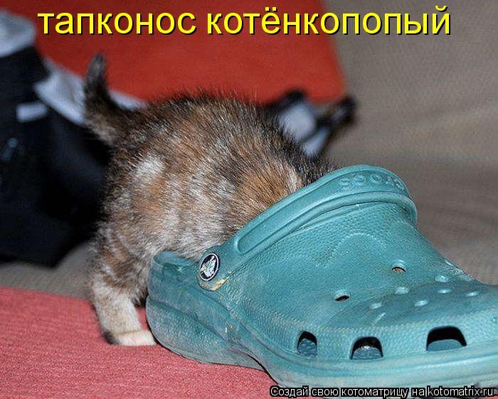 Котоматрица: тапконос котёнкопопый
