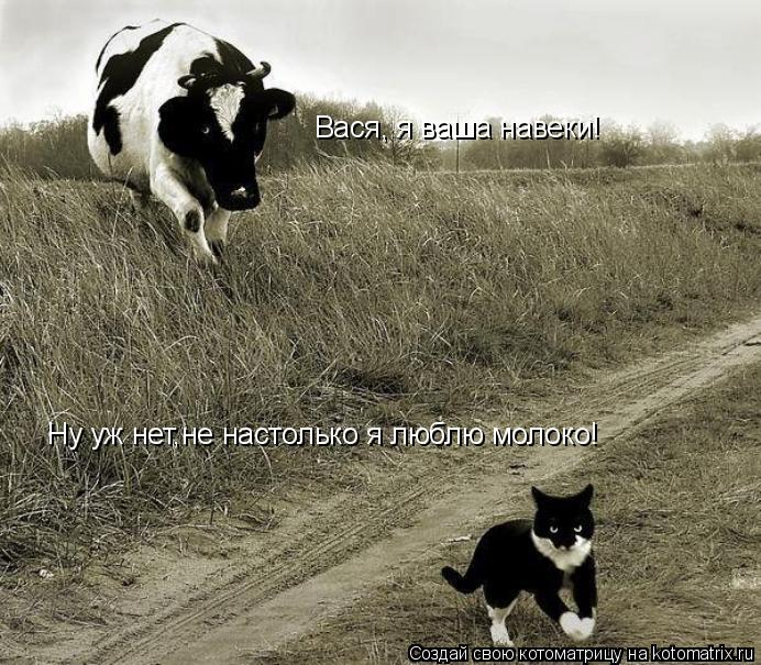 Котоматрица: Вася, я ваша навеки! Ну уж нет,не настолько я люблю молоко!