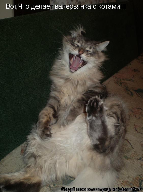Котоматрица: Вот,Что делает валерьянка с котами!!!