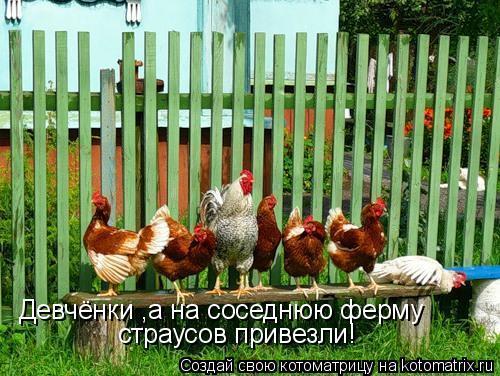 Котоматрица: Девчёнки ,а на соседнюю ферму страусов привезли!