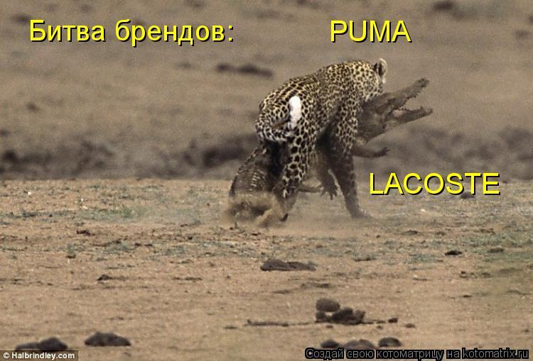 Котоматрица: Битва брендов: PUMA LACOSTE
