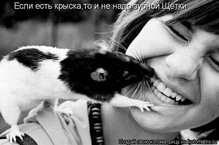 Котоматрица: Если есть крыска,то и не надо зубной Щётки