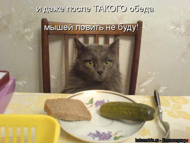 Котоматрица: и даже после ТАКОГО обеда мышей ловить не буду!