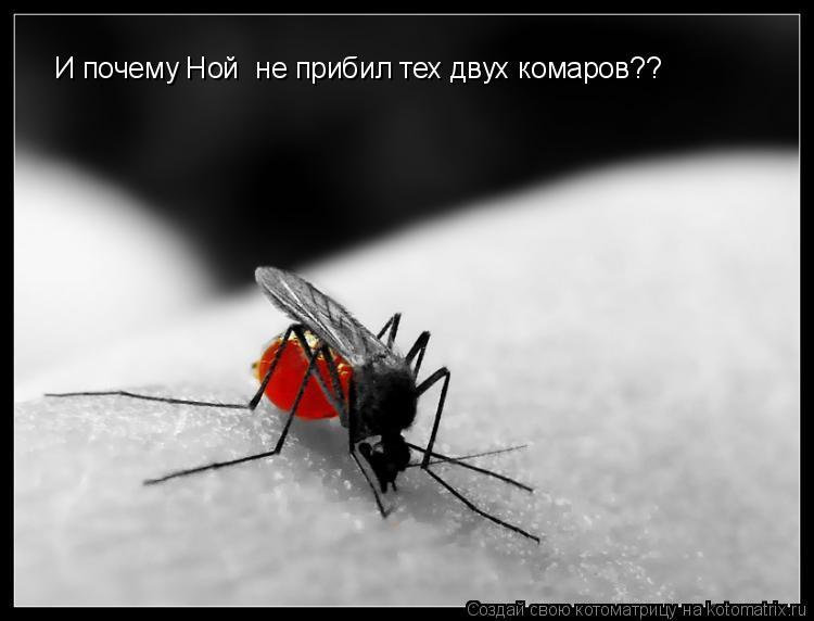 Почему ной не прибил тех двух комаров