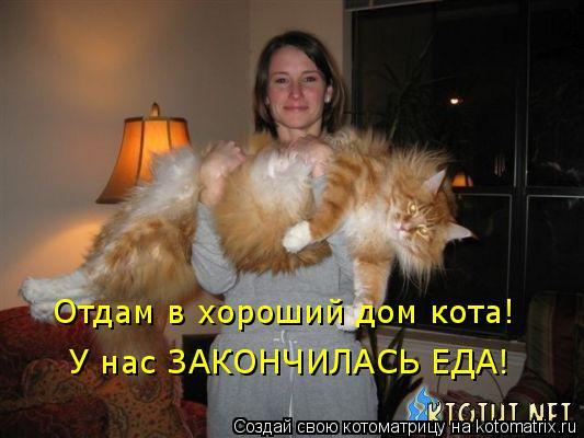 Котоматрица: Отдам в хороший дом кота! У нас ЗАКОНЧИЛАСЬ ЕДА!