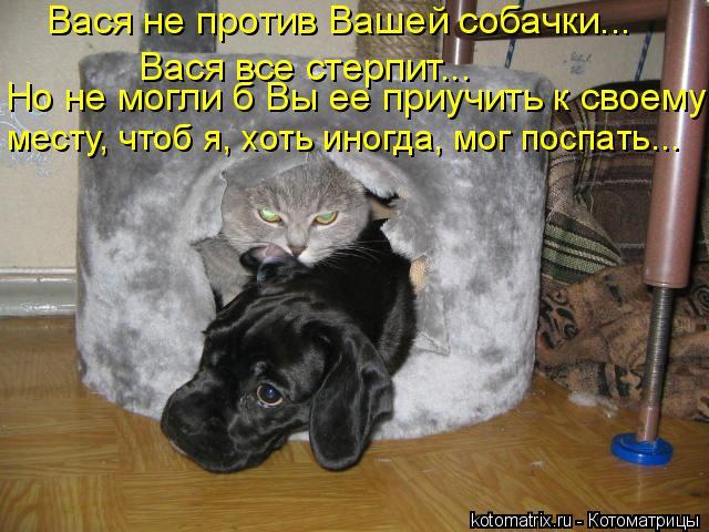 Котоматрица: Вася не против Вашей собачки...  Вася все стерпит….. Но не могли б Вы ее приучить к своему  месту, чтоб я, хоть иногда, мог поспать...