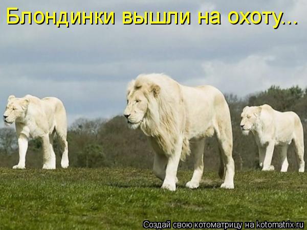 Котоматрица: Блондинки вышли на охоту...