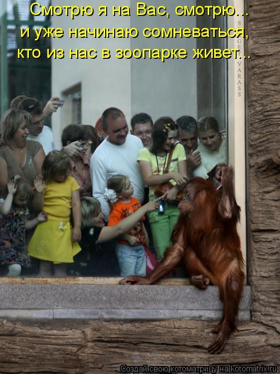Котоматрица: Смотрю я на Вас, смотрю...  и уже начинаю сомневаться,  кто из нас в зоопарке живет...