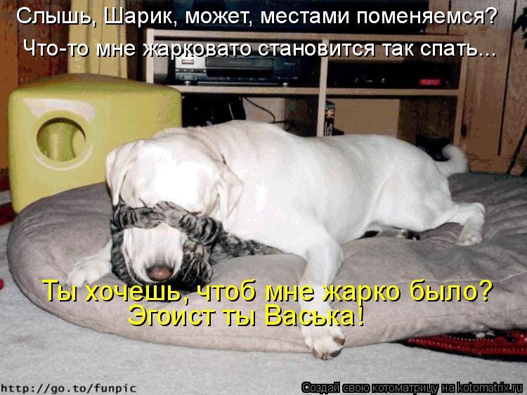 Котоматрица: Слышь, Шарик, может, местами поменяемся?  Эгоист ты Васька! Ты хочешь, чтоб мне жарко было?  Что-то мне жарковато становится так спать...