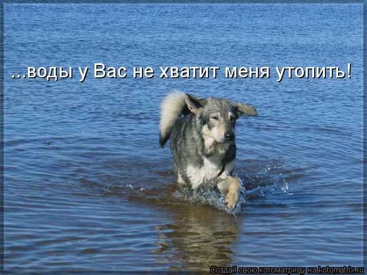 Котоматрица: ...воды у Вас не хватит меня утопить!