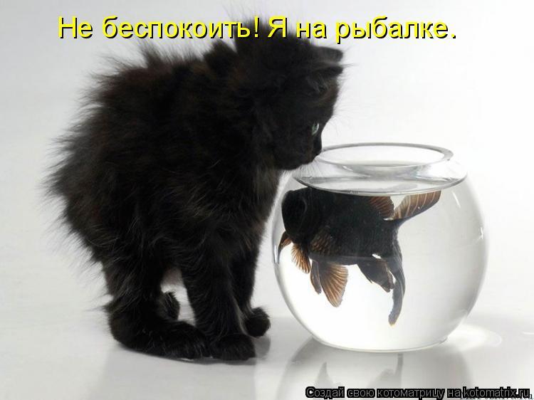 Котоматрица: Не беспокоить! Я на рыбалке.