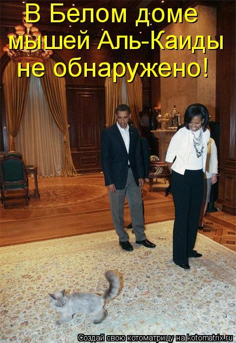 Котоматрица: В Белом доме  мышей Аль-Каиды  не обнаружено!